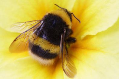 向大黄蜂取经,V2X通讯如何找「捷径」?