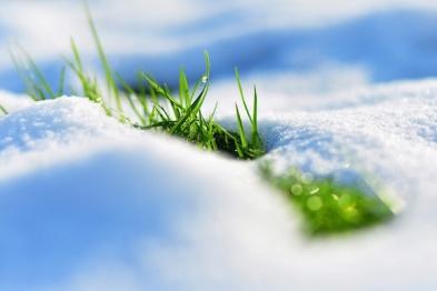 【一周动态】LINC2015落幕,CES2016前瞻与北京的第二场雪