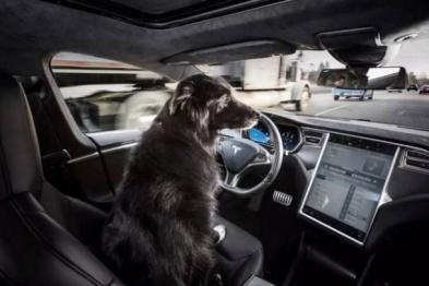 特斯拉未来免费向其它汽车厂商开源汽车安全软件