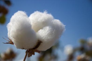 在塑料之外,自然纤维也是轻量化的一员猛将