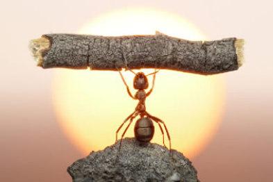 【创见】车蚂蚁:小胳膊腿儿绊倒汽车后市场大象?