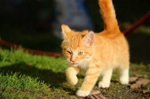 放猫(Herding Cats):从YouTube视频里面寻找猫的图片是深度学习杰出性能的首次展现。(译者注:herdingcats是英语习语,照顾一群喜欢自由,不喜欢驯服的猫,用来形容局面混乱,任务难以完成。)