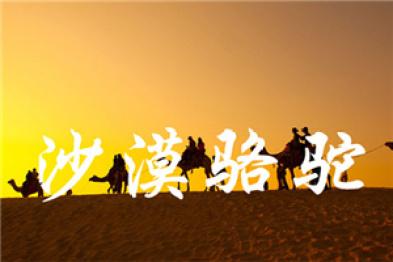 【一周动态】像沙漠骆驼一样奔忙依旧,不要停下来