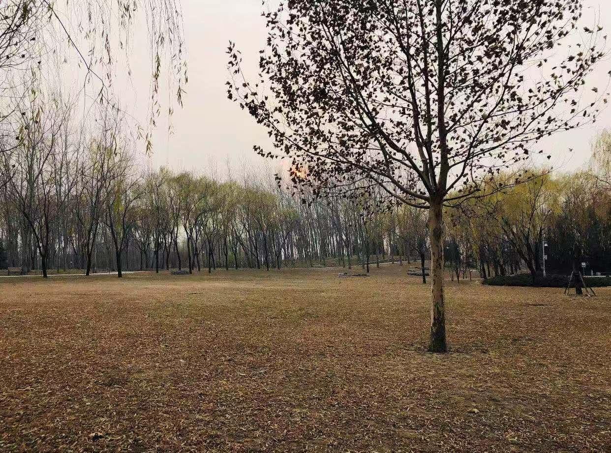 初冬的海淀公园
